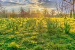 this lovely spring sunshine