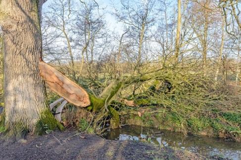 the broken limbs have fallen across the stream