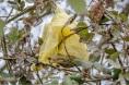 A rare golden poo bag among the brambles