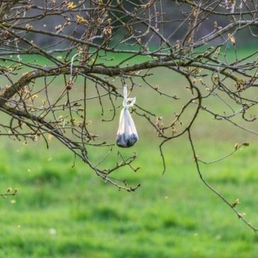 poo bag in a tree by DKG