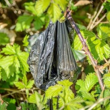 Common black poo bag among the leaves