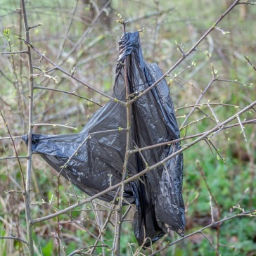 Greater black poo bag draped in a hedge