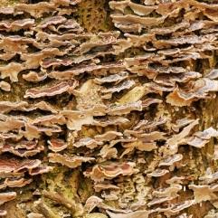 Fungus growing on dead wood