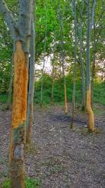 ...the trees will die... CJS