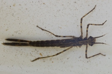 ..fanged riverbed stalker.. by Jon Beresford - Flickr
