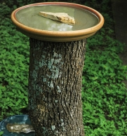 a flowerpot saucer on a log (CC0)