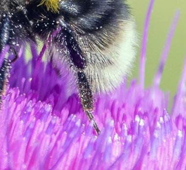 empty pollen baskets on her back legs