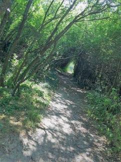 Path by Neave Duggan