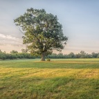 lone oak by DKG