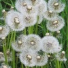 Flora icons 200 px