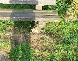damaged bench