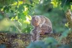 Grey squirrel by DKG
