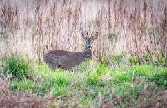 ...the buck, pictured here in May...