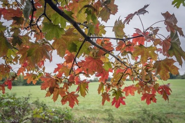 Autumn Leaves by DKG
