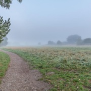 Across a misty Lambrok Meadow