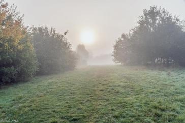 ...those lovely foggy mornings.