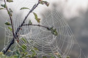 Spider webs in the dew