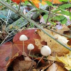 Fungus by Simon & Sarah Handley