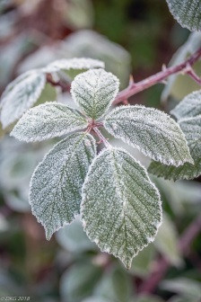 . . . and a frost greeting us today.