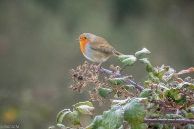 Lovely shots of the Robin. . .