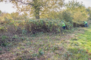 . . . to remove the dense growth of brambles . . .