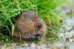 increasiing biodiveristy