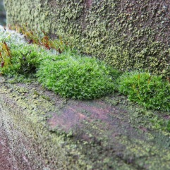 Moss on the gatepost by Suzanne Humphries