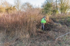 . . clearing the blackthorn and brambles. .