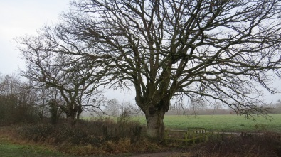 . . .magnificent trees standing alone. . .
