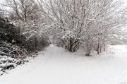 Snow in the park 2019_DKG3308