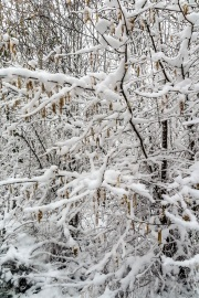 Snow in the park 2019_DKG3331