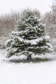 Snow in the park 2019_DKG3343