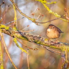 Jenny Wren did pose just long enough